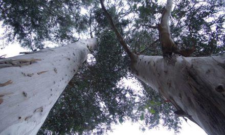 Contabilizadas unas 50 especies vegetales invasoras en el entorno natural