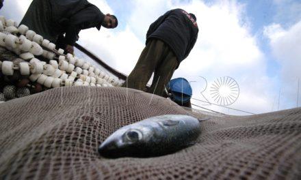 """El PSOE """"mantiene una constante preocupación"""" por la """"drástica situación"""" del sector pesquero ceutí"""