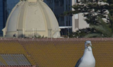 La Ciudad recuerda las sanciones por incumplir la ordenanza sobre pavanas