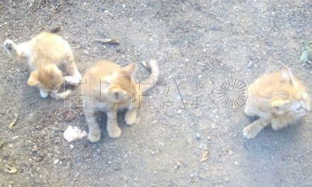 Critican el trato de un 'jardinero' a una colonia de gatos en el Polígono