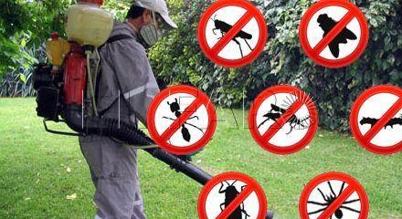 Sanidad Ambiental realizó 60.000 actuaciones de control de plagas entre enero y julio