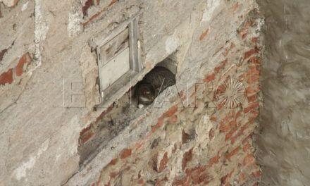 La Protectora salva a una gata oculta en el hueco de un muro