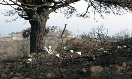 Queda en libertad el detenido por el incendio en el Monte Hacho
