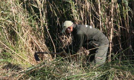 Las Brigadas Verdes han encontrado una pistola en Cortadura del Valle