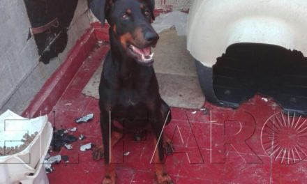Muere un perro por la ingesta de una sustancia desconocida