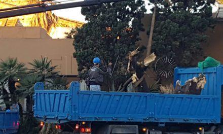 """Septem Nostra denuncia la """"destrucción"""" de las yucas de la fachada del Hotel la Muralla"""