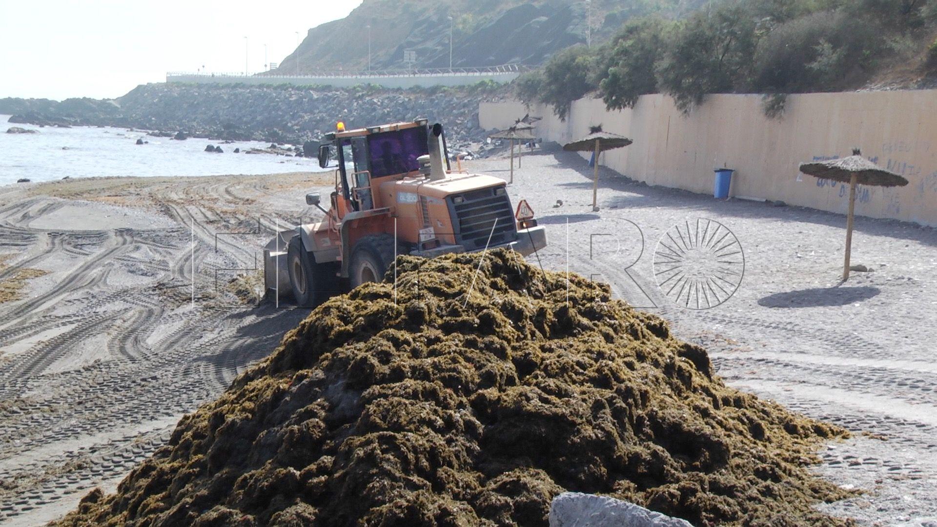 Aconsejan catalogar como especies invasoras las algas exóticas
