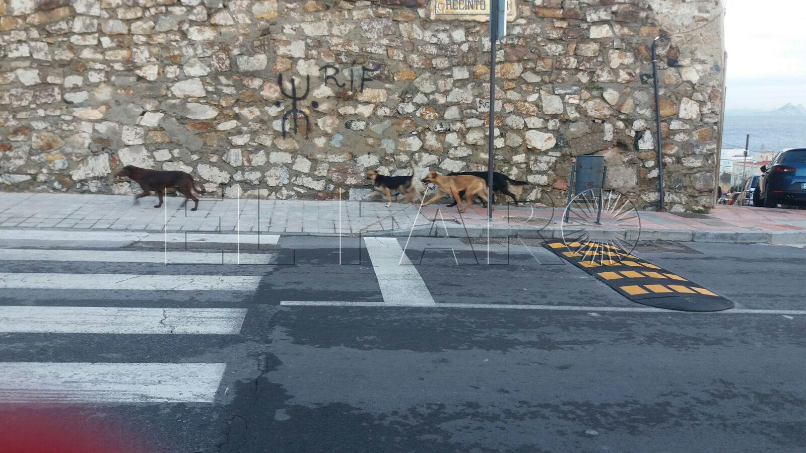 Nuevo ataque de los perros salvajes a las colonias de gatos