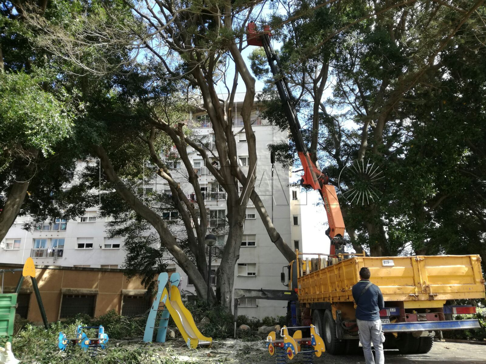 Comienzan a retirar la gran rama que se desprendió en los Jardines de la Argentina