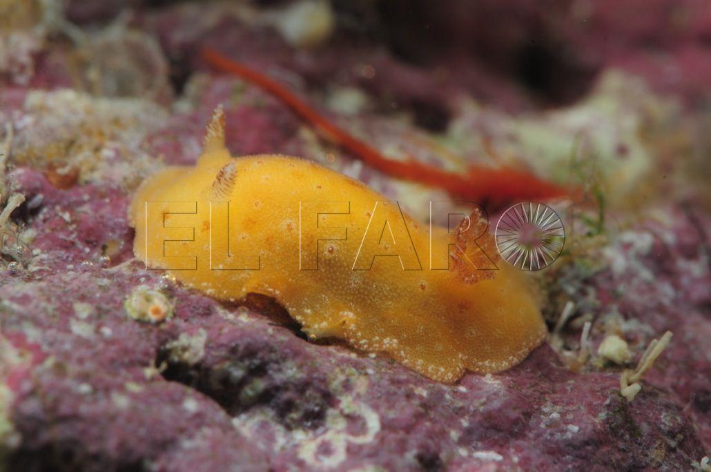 Bajo el mar de Cabo Verde