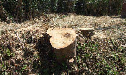 Septem Nostra denuncia la tala de árboles en el espacio natural protegido de Calamocarro