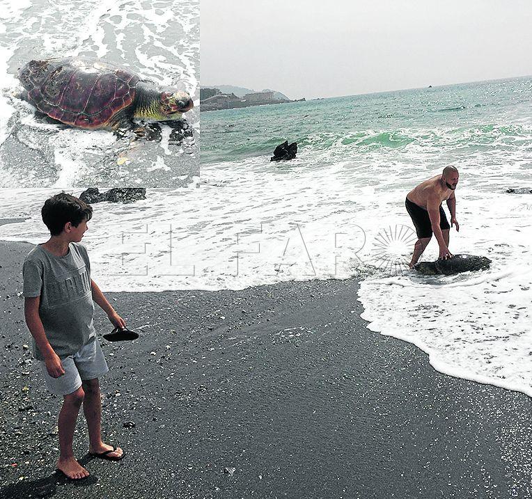 Hallada muerta una tortuga boba con signos de haber caído en redes de enmalle