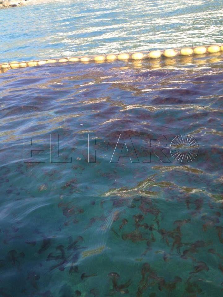 Medusas en la playa del Chorrillo