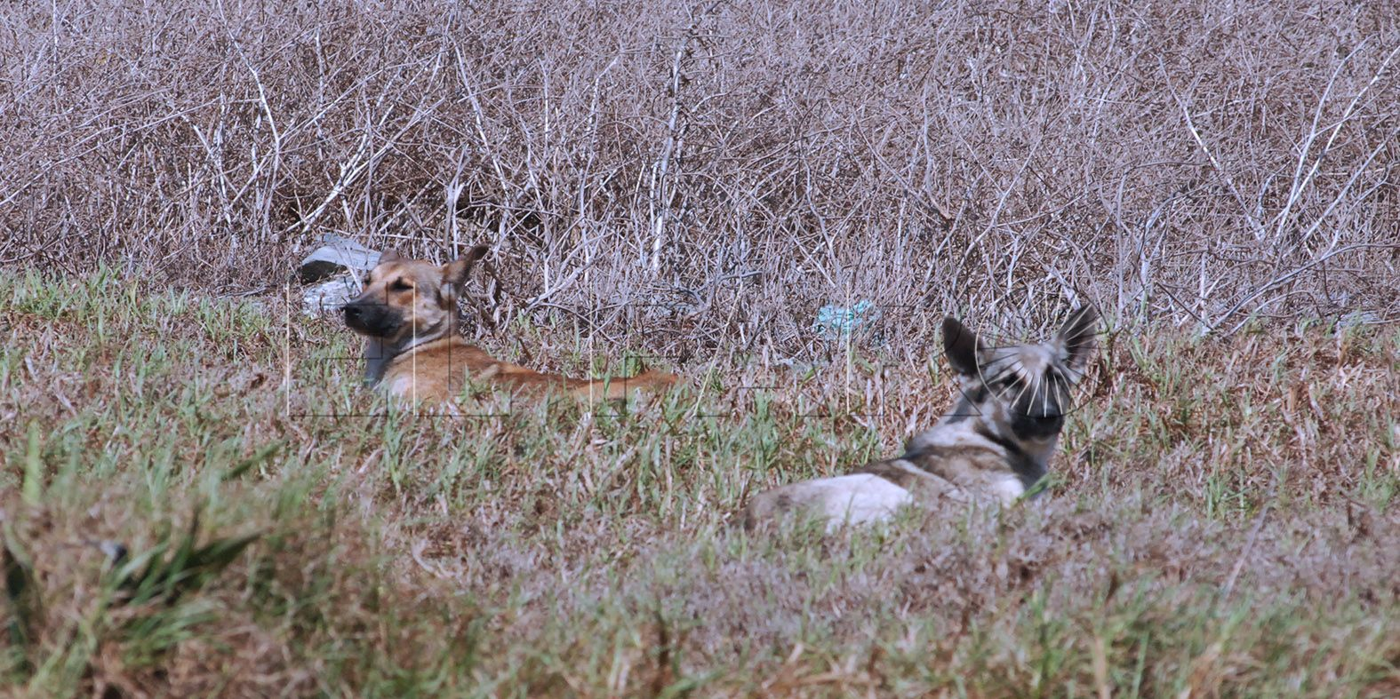 Sanidad pone jaulas-trampa para capturar a 15 perros asilvestrados