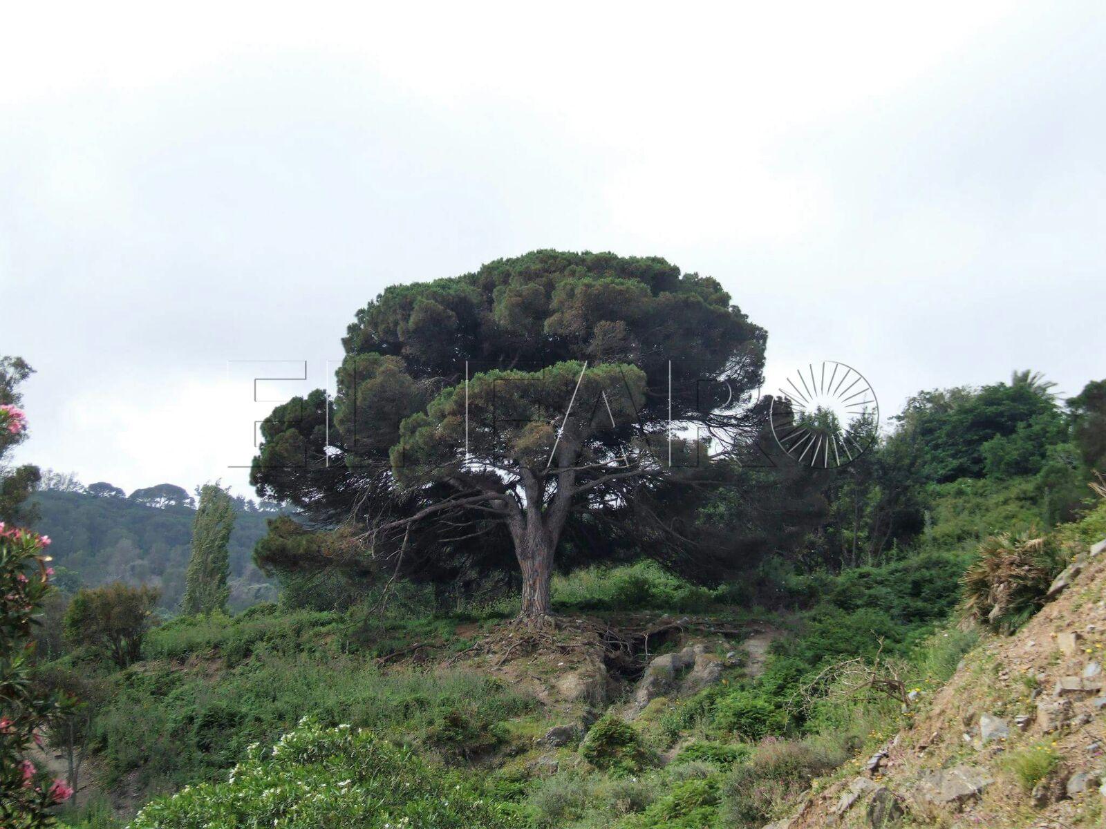 Ceuta, en el camino de la desertificación
