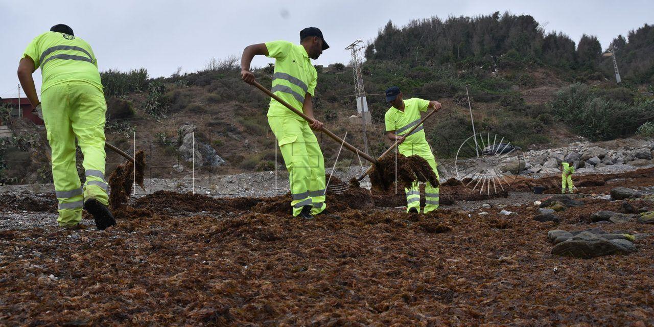 Tragsa recogió 165 toneladas de algas desde el pasado 30 de junio