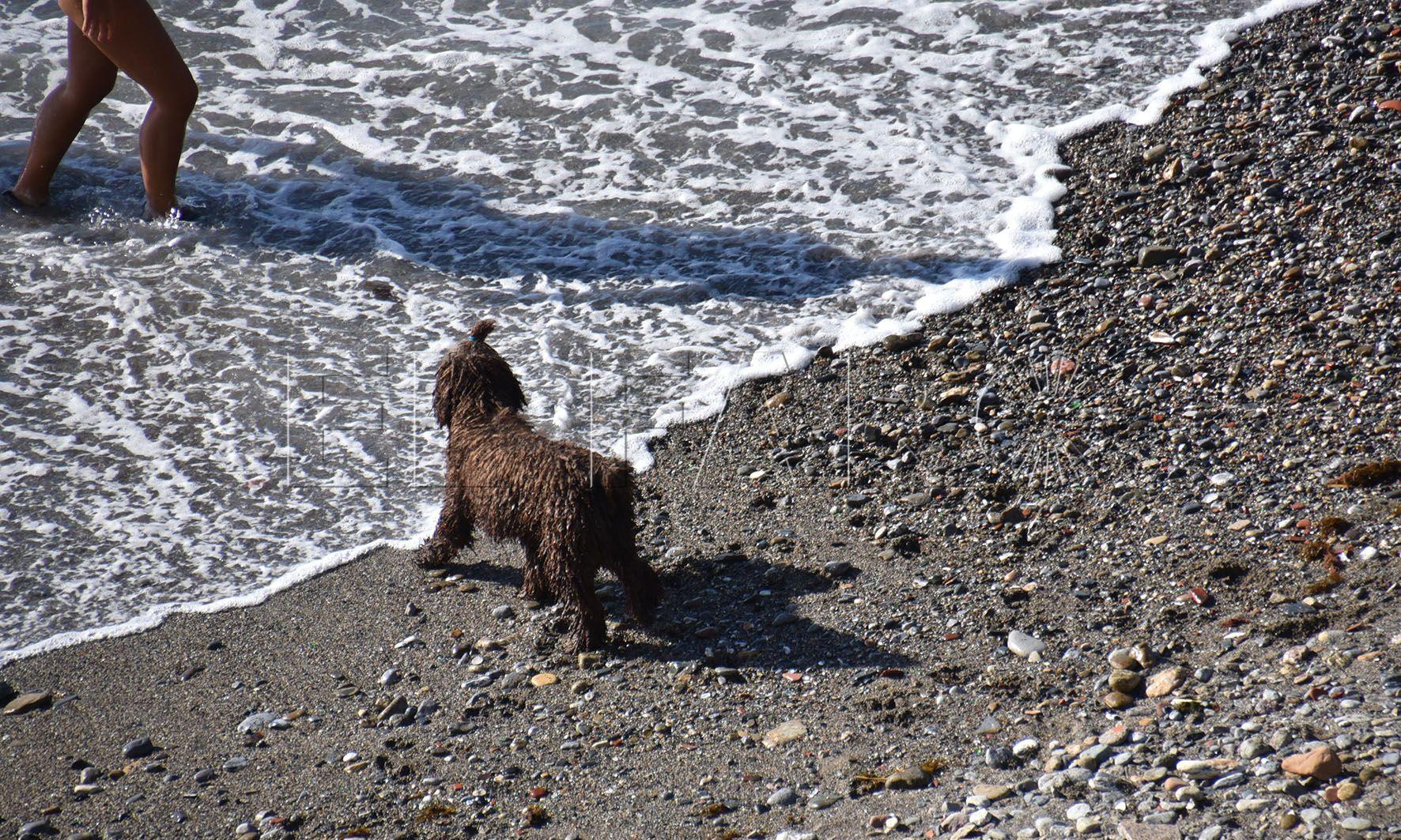 El Gobierno buscará una fórmula para permitir el acceso de perros al 'Chiclón'
