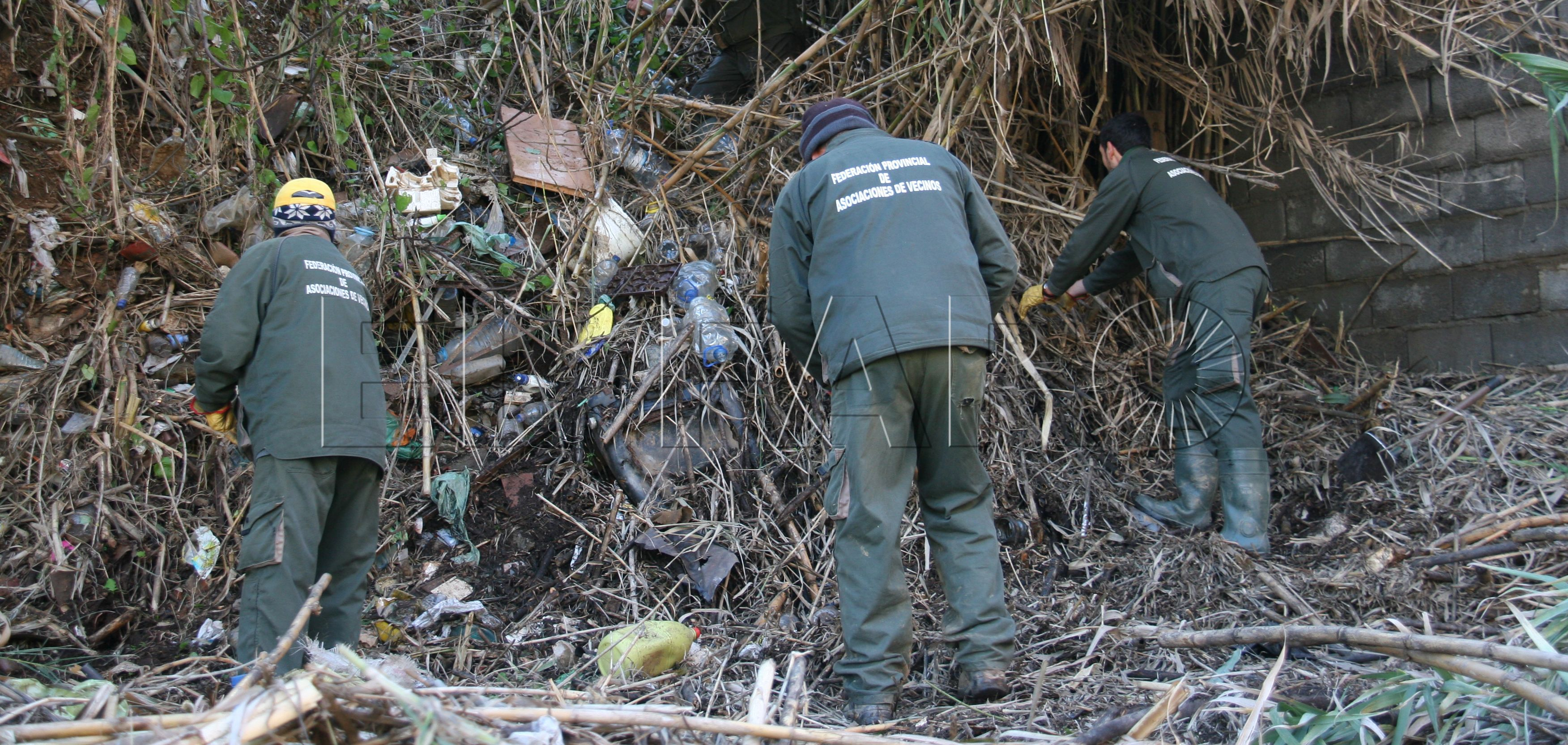 Las Brigadas Verdes podrían ejecutar la poda de palmeras y árboles