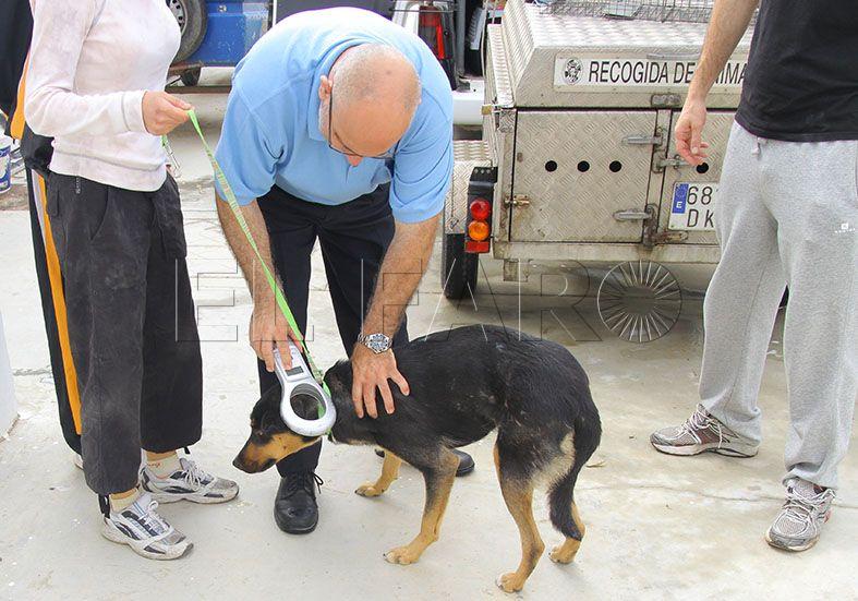 La obra de la Protectora de Animales costará 700.000 euros