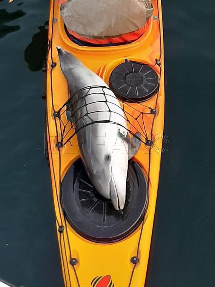 delfin-kayak
