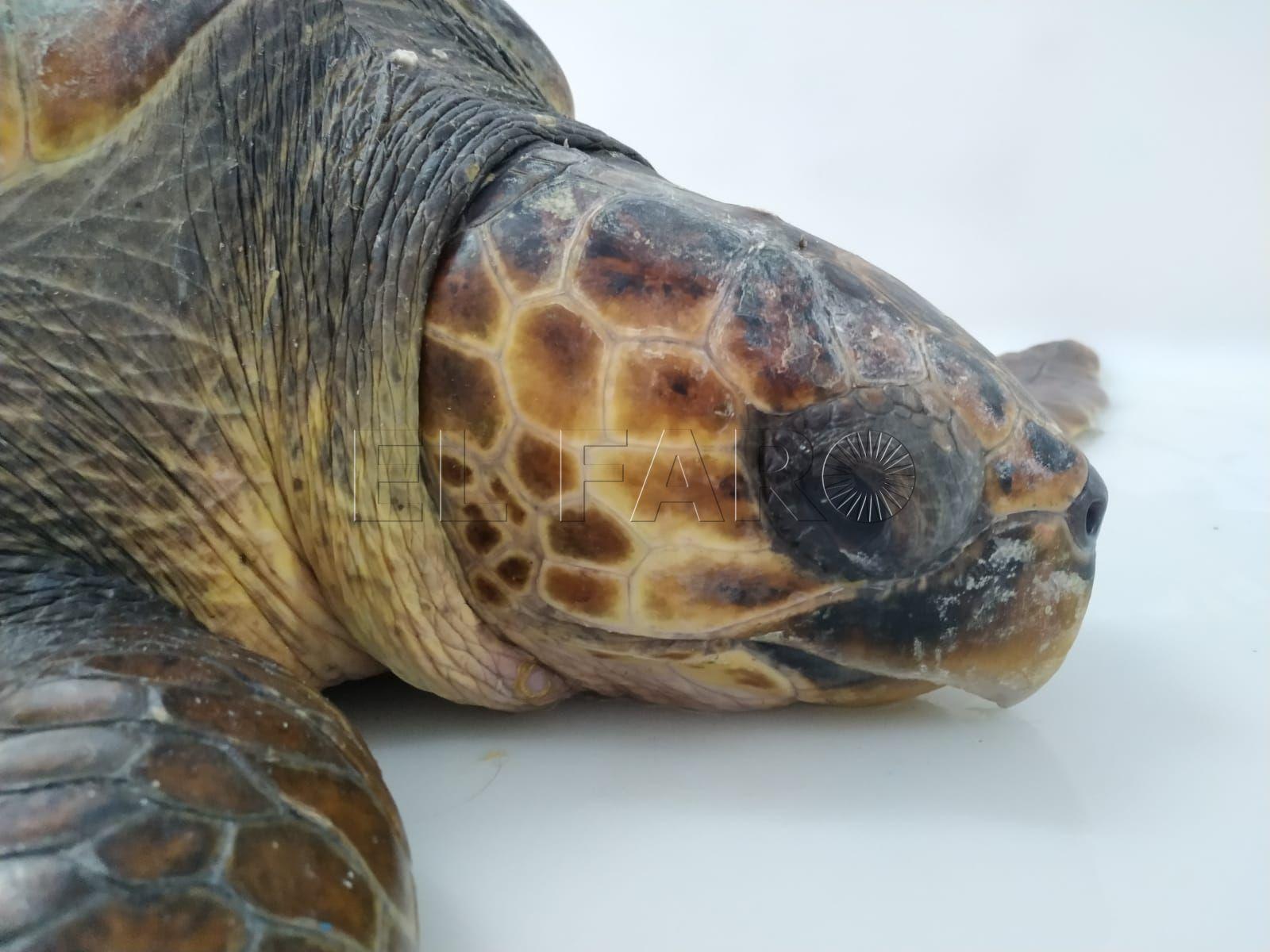 tortuga-almadraba-cecam-agosto-12-3