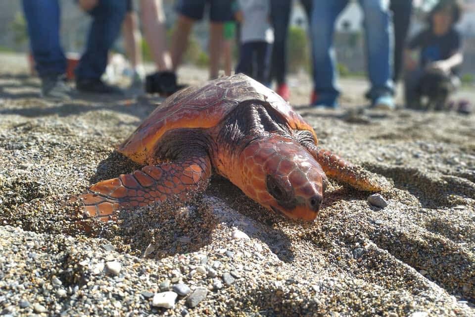 tortugas-cecam5